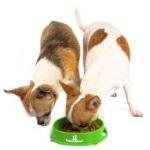 Основные правила кормления собаки