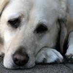 Внешние признаки заболеваний собак
