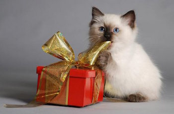 http://animal-hope.ru/images/4/pets_gift.jpg