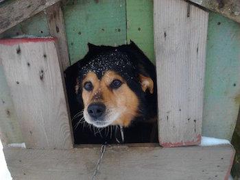 http://animal-hope.ru/images/5/budka.jpg