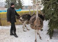 Дмитрий и страусы