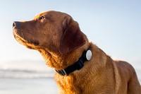 гаджеты для собак