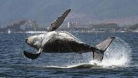 кит в полете