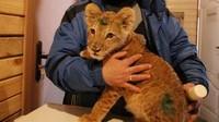 львенок с Арбата