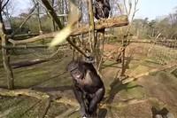 обезьянье селфи