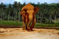 слон с палкой