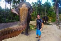 слоно-селфи