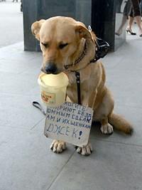 собака собирает деньги