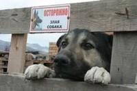 собака совсем не злая
