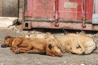 убитые собаки