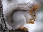 белочка зимой