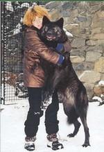 человек и волк