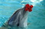 дельфин с цветком