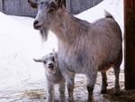 Дуся с сыночком