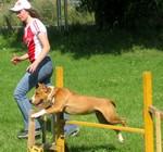 фитнес с собакой