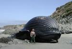кит на берегу