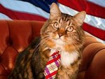 кот-политик