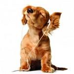 музыка для собак