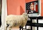 овцы в отеле