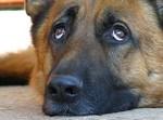 потерянная собака