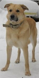 собака Наташа