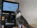 собака у экрана