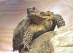 черепаха Биби