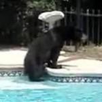 медведь в бассейне