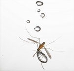 полет комара в дождь