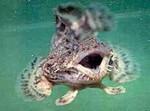рыба-мичман