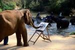 слон- живописец