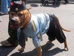 собак - милиционер