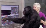 умный шимпанзе