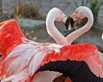 фламинго в Тунисе