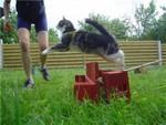 кошачье аджилити