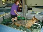 собака на водной дорожке