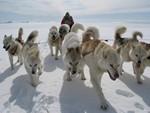собаки-спасители