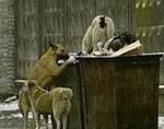 собаки на свалке