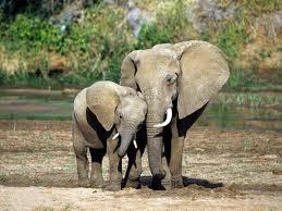 мама и детеныш
