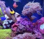 морской аквариум1