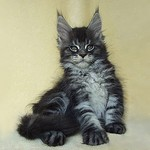 роскошный кот
