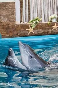 свадьба дельфинов