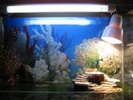 УФ лампа для черепахи